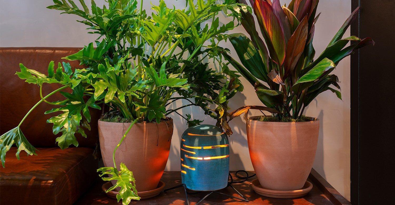 MADE Plants